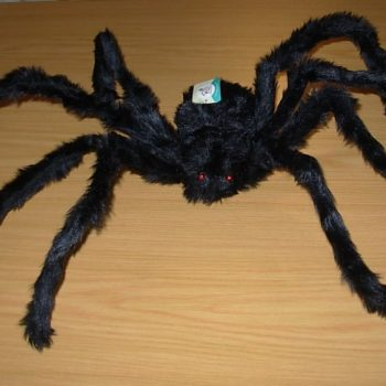 Furry large spider