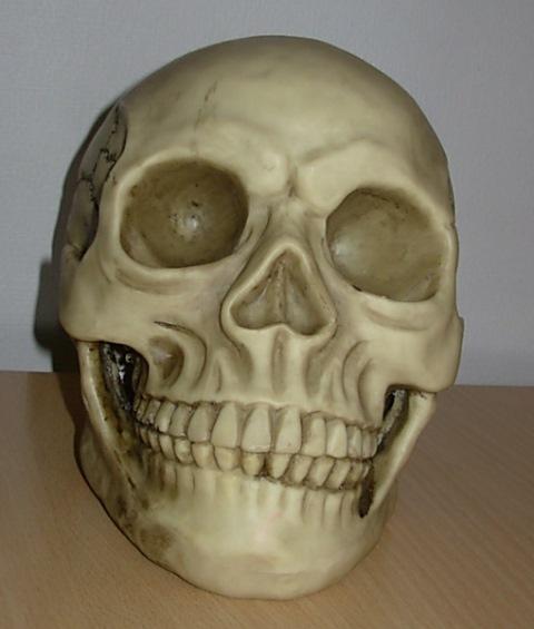 Skull life size