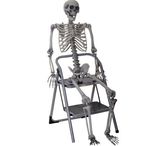 Life size skeleton 5ft