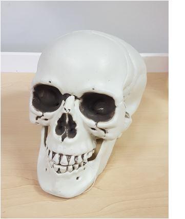 Plastic skull life size