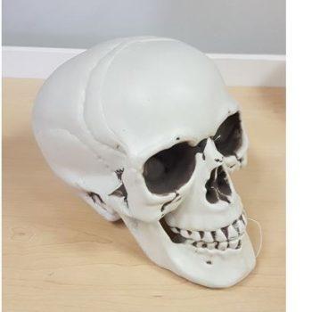 Plastic life size skull