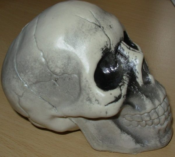 Small plastic skull side