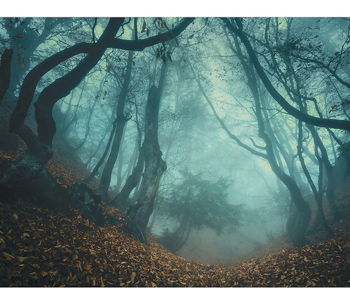 Haunted forest backdrop