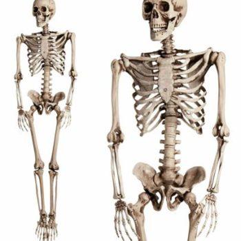 Life size skeleton prop