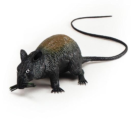 Squeaking rat