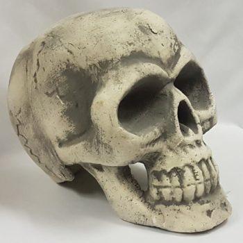 Large polystyrene skull