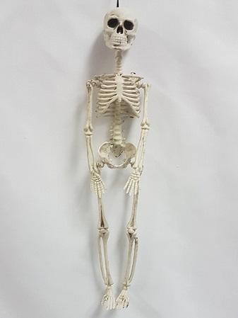 Small hanging skeleton