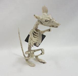 Skeleton - rat side