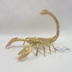 scorpion skeleton